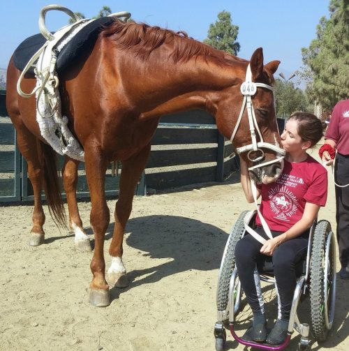 Equine therapy horse therapy rehabilitation physical therapy HelpHOPELive Alanna Flax-Clark horse riding horses