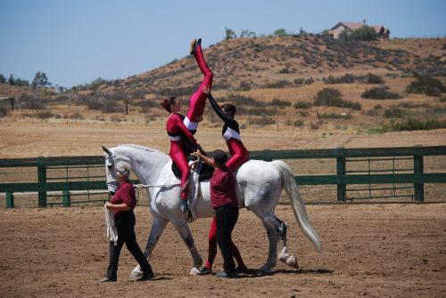 Equestrian vaulting horse therapy hippotherapy Alanna Flax-Clark